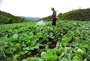 เกษตรกรกำลังฉีดยาฆ่าแมลง