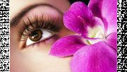 รูปประกอบเป็นรูปดวงตาข้างซ้ายของผู้หญิง และมีดอกกล้วยไม้สีม่วงอยู่ใกล้ๆดวงตา
